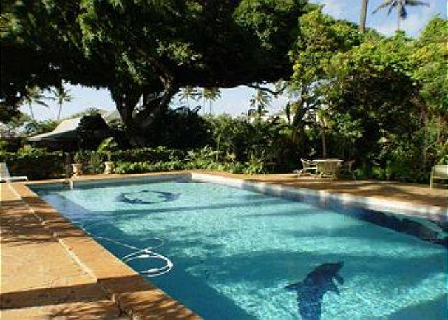 Shared Pool with Cottage in the Background. - B1. Garden Cottage - Honolulu - Honolulu - rentals