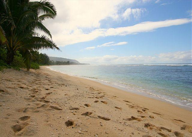 Beautiful Sandy Beach at the North Shore 33 Home. - D0. North Shore 33 - - Haleiwa - rentals