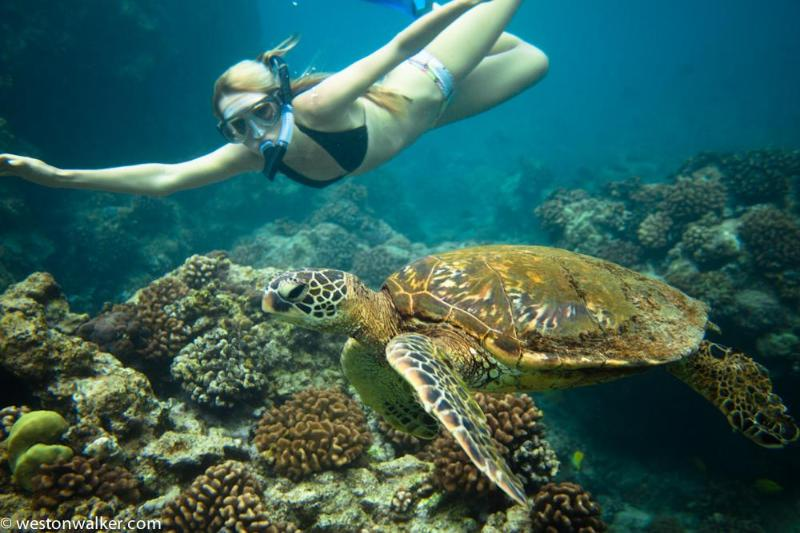 Snorkeling with Honu right offshore at Hale Honu, Turtle Cove, Kailua-Kona - Amazing Oceanfront 3/2 home + 1/1 studio in Kona - Kailua-Kona - rentals