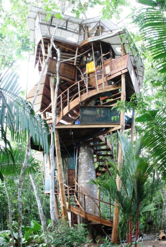 Costa Rica Ultimate Too Cool Tree house stands 65' tall - UltimateTreehouse/Southern Costa Rica/ 50%OFFAug - Puerto Jimenez - rentals