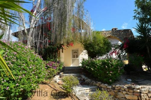 Paphos 2 Bedroom-1 Bathroom House (Villa 559) - Image 1 - Tala - rentals