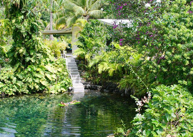Walk down the private steps from Honu's Hideaway into what may be the most charming, tranquil, and inviting tide pool in the area! - Enjoy the Warm, Inviting Tide Pool at  Honu's Hideaway - Kapoho - rentals