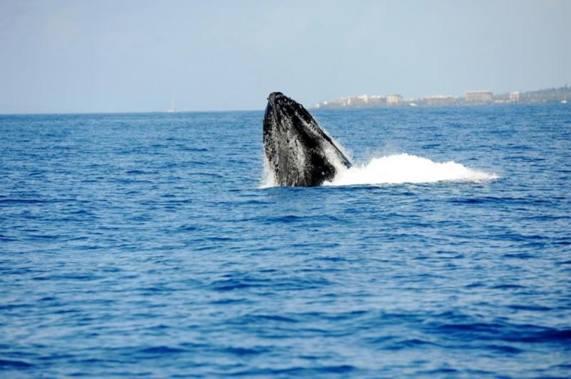 A Whale of a Time1 - Luxury and Savings in one place! - Kihei - rentals