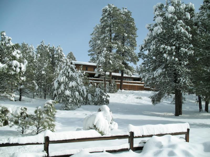 Secluded In The Tall Pines - Dream Cabin, Unbeatable Views, Privacy & Ambience - Flagstaff - rentals