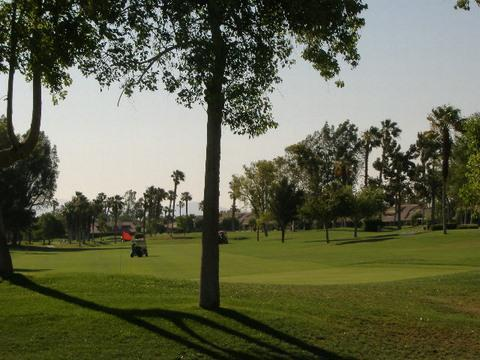 View from Patio - Tropical Paradise Awaits You - Property ID 41530 W - Palm Desert - rentals