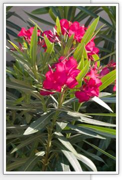 BLOOMS FROM OUR TROPICAL GARDEN - Las Ventanas Condominio - Cozumel - rentals
