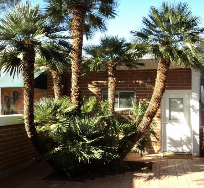 Catalina View Casita-Walled Courtyard and South Entry - Charming NE Foothills Casitas-Gorgeous Sunset View - Tucson - rentals