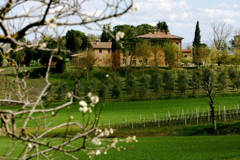 Casa Paterna and olive orchard from road - Casa Paterna, an elegant Tuscan/Umbrian retreat - Castiglione Del Lago - rentals