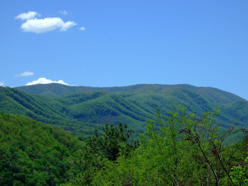 Cove Mountan Views - Moonshine Cabin - Pigeon Forge - rentals
