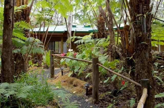 Stroll the garden paths under the giant Hapu'u  tree ferns and towering Ohia trees. - Enchanted Rainforest Cottages, near park entrance - Volcano - rentals