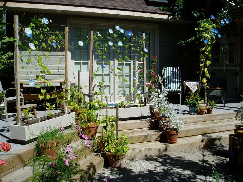 Summer blooms at the Bay Window B&B. - Toronto Island B&B 15 min by ferry from downtown - Toronto - rentals