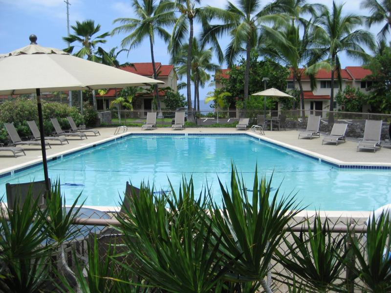 Swim with the dolphins...Lovely pool with ocean view as well as the 3 dolphins! - Oceanfront Complex/Keauhou-Kona Surf &Racquet Club - Kailua-Kona - rentals