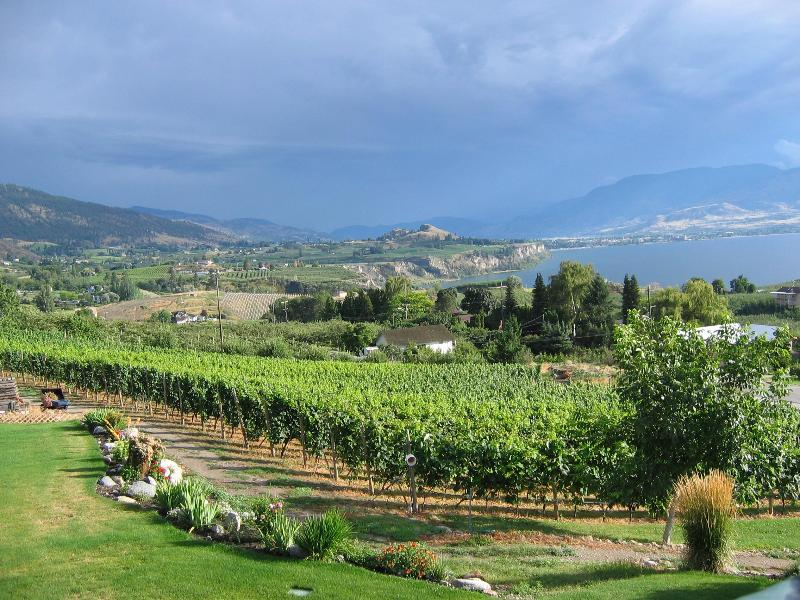View of the vineyard and Penticton - Arta B&B and Vineyard --  2 BR  Vacation Suite with Stunning Lakeviews - Penticton - rentals