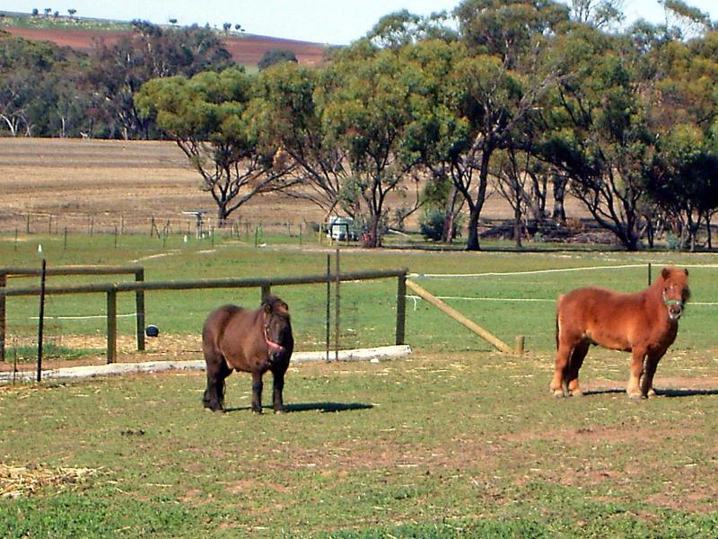 Chester & Bailey - Lavendale Farmstay and Cottages - York - rentals