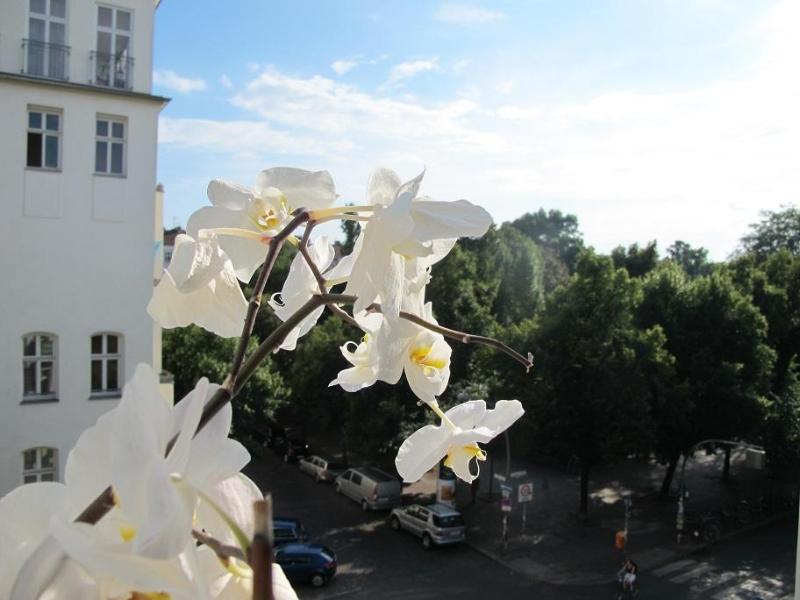 Views from the apartment - Apartments Am Boxi: Spacious, bright, free Wlan - Berlin - rentals