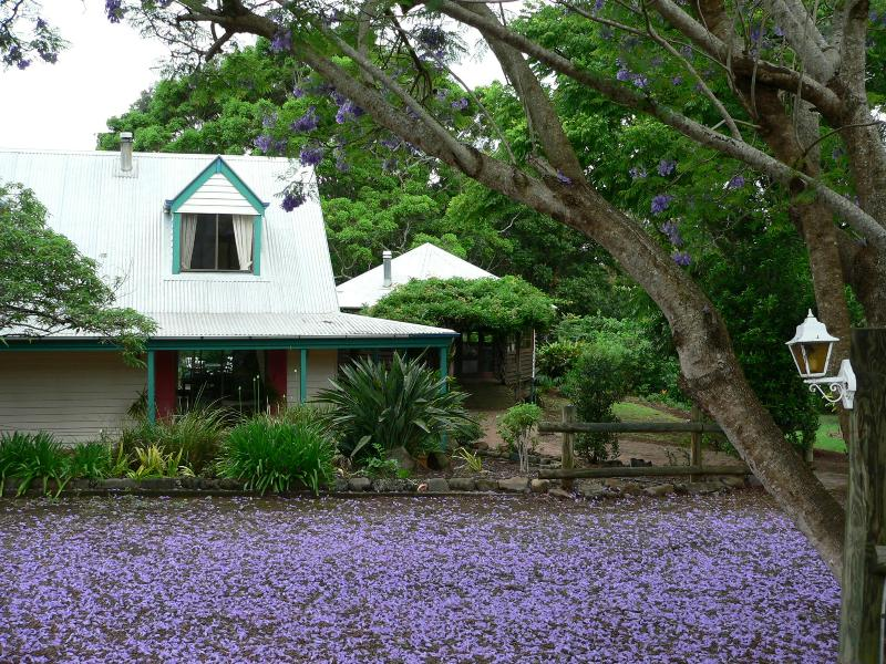 African Cottage at jacaranda time - African Cottage - Maleny - rentals