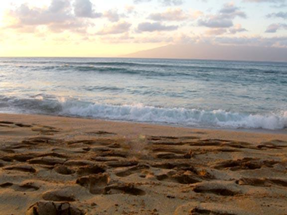 Your Footprints Can Be Here! - My Napili Condo #15/50 Steps from Napili Bay Beach - Hi Hat - rentals