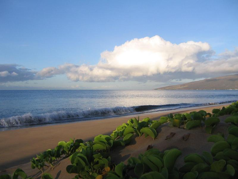 Clean beach, easy slope- walk for miles! - BEACHFRONT-Remodeled Plantation Style-Sleeps 2 - Kihei - rentals