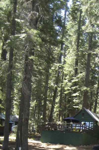 Wilson cabin from the road - Wilson's Cabin at Lake Almanor, Plumas Co., CA - Lake Almanor - rentals