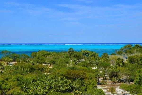 Romantic hideaway at the western end of Grace Bay Beach. Excellent swimming is a 5 minute walk away. TNC COR - Image 1 - Grace Bay - rentals