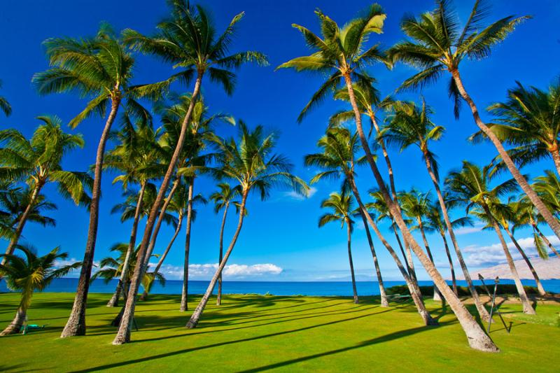 Grass Lawn and Property Running Down to the Ocean's Edge - Sapphire Seas Beach Estate - Kihei - rentals