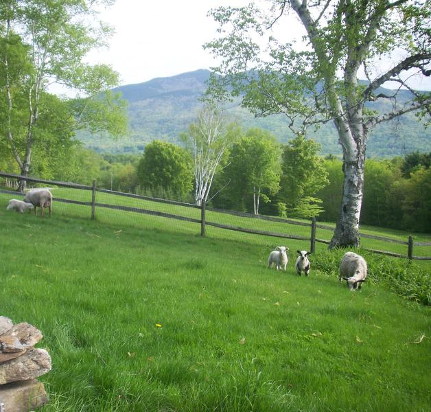 Spring Lambs on the Lawn - High Shelter Farm: Ascutney Mountain View Charmer - Perkinsville - rentals