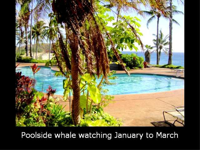 Whale watching from the ocean-side fresh water pool - 5 Kepuhi Beach Resort Condos - Beautiful Views! - Maunaloa - rentals