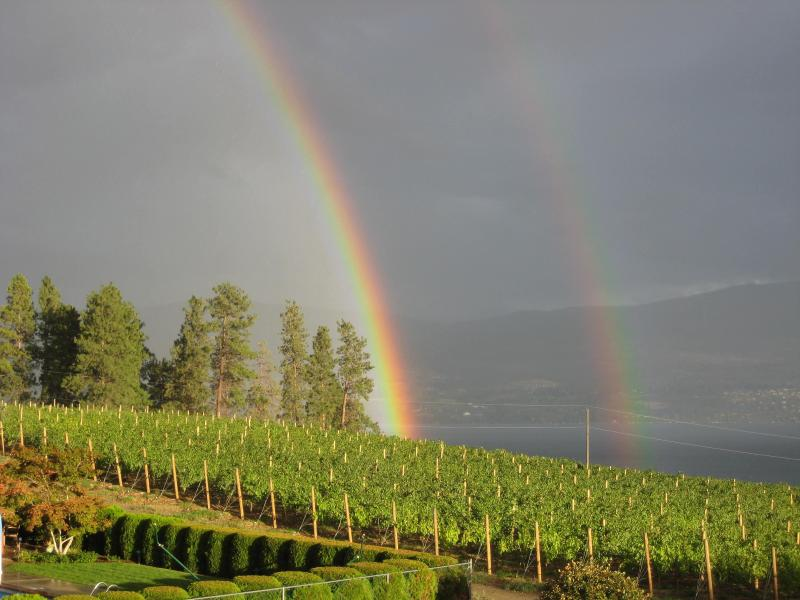 view from patio - Beautiful Vineyard and Lake View, Private setting - West Kelowna - rentals