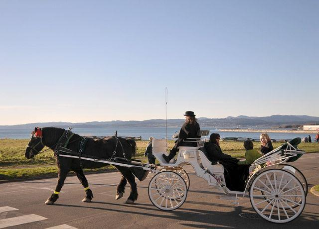 Watch Horse Drawn Carriages Pass By Our OCEANSIDE Heritage House Throughout the Day! - Oceanside Suite in James Bay Heritage 6-Plex - Victoria - rentals