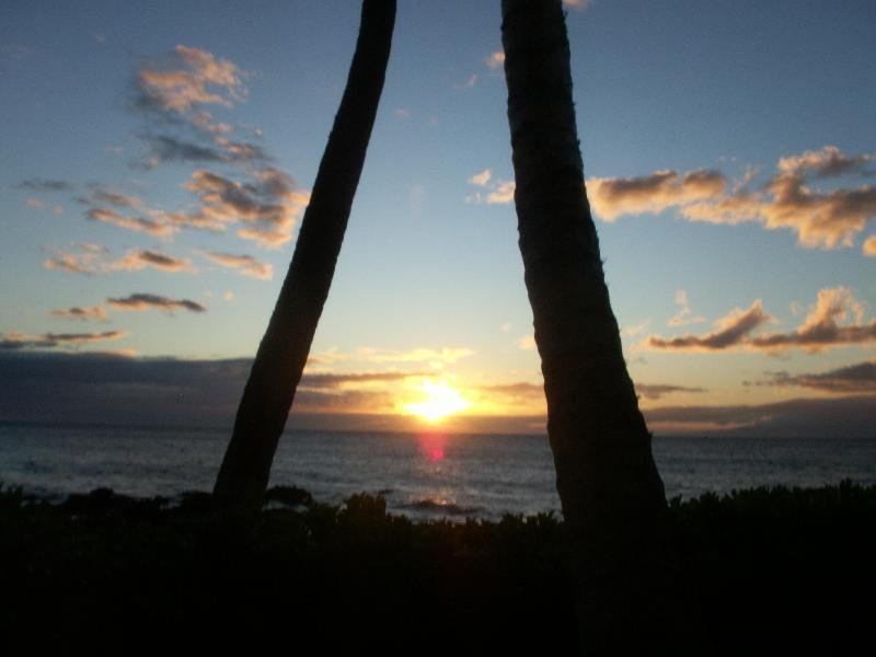 Maui Kamaole Sunset  - LAST MINUTE OCEAN VIEW DEALS Now Thru Sept $125! - Kihei - rentals