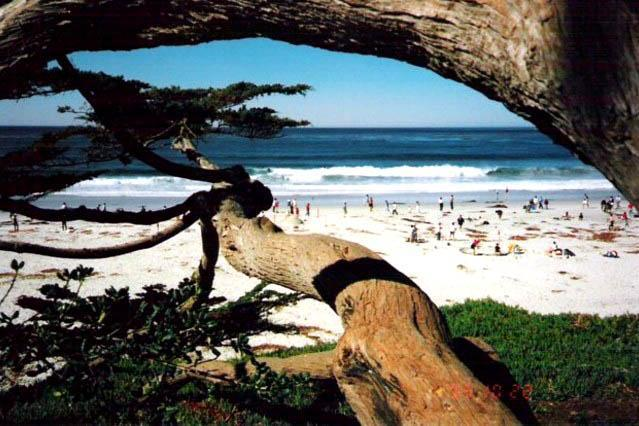 Main beach at the bottom of Ocean Ave. - Like a TREEHOUSE + Bring Fido! 10 min walk to town - Carmel - rentals