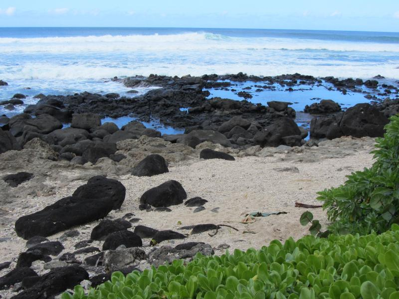 This is your beachfront at the Cottage - Paradise Elua-Beachfront Cottage  Haleiwa Hawaii - Haleiwa - rentals