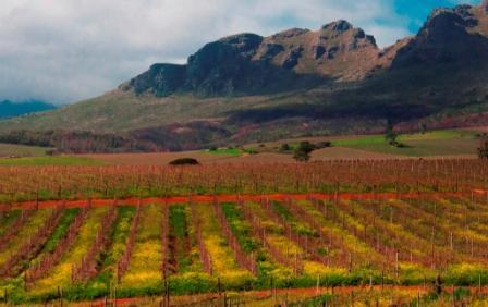 Vineyard and Mountain Views - Boutique Self Catering Unit near Stellenbosch - Stellenbosch - rentals