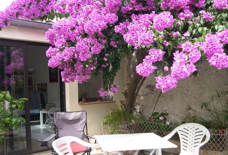 Beautiful Bougainvillea is talking point in the village - Four bedroom stone village house in Fitou, Aude - Fitou - rentals