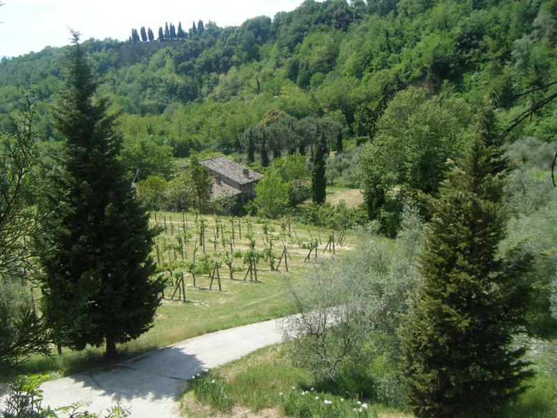 Road to Molino - 4 Apt Rentals in the heart of Tuscany 1-3 bedrooms - Terranuova Bracciolini - rentals
