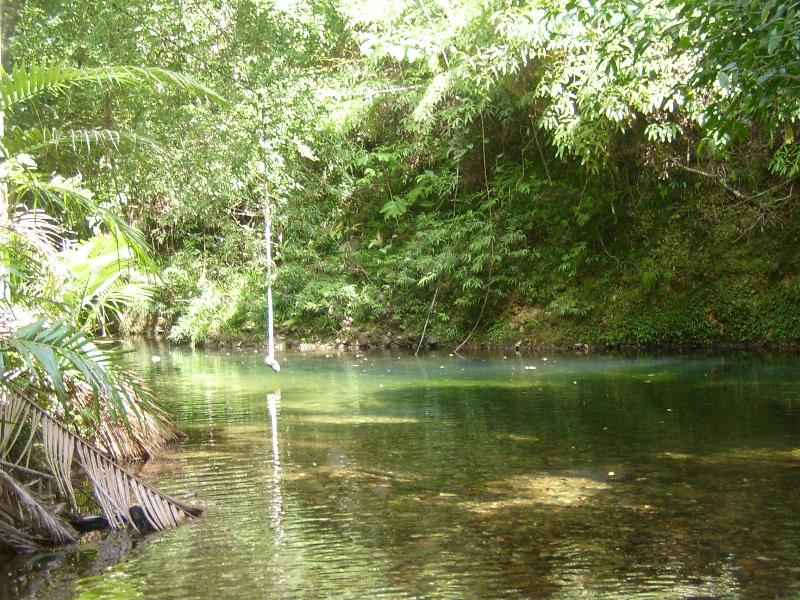 Swimming hole - Daintree Mountain View Retreat & Vanilla Beans - Daintree - rentals