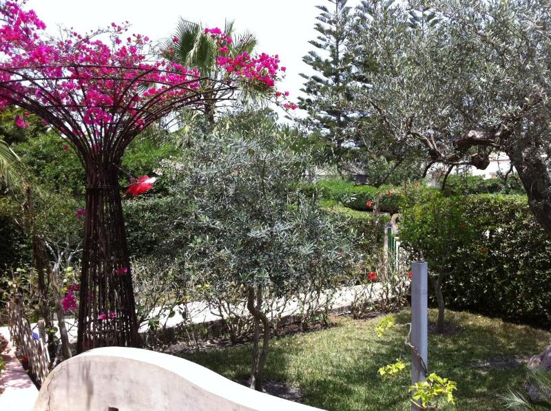Bougainvillea Topiary - Private Sea Side Villa in Siracusa, San Lorenzo - Noto - rentals
