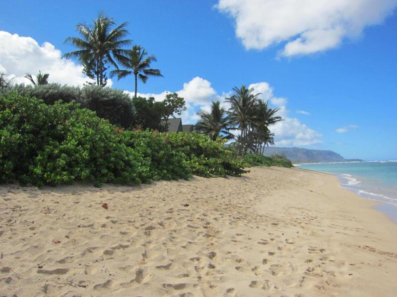 Beach across the street - Oahu North Shore Cozy Condo Steps from the Beach - Waialua - rentals