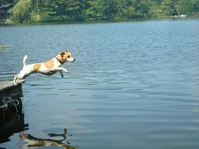 Fun from the end of the dock! Perfect for pets and people! - Perfect Lakeside Cottage NY/VT Boarder - Granville - rentals