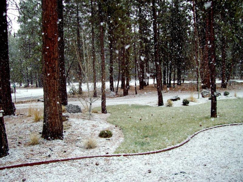 Winter view from front window - WALLING BEND APARTMENT - La Pine - rentals