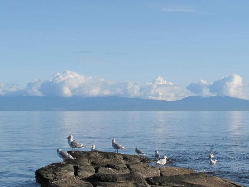 EVEN THE SEA GULLS RELAX - VANCOUVER ISLAND - ELES ESCAPE B&B by the SEA - Lantzville - rentals