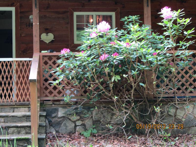 welcome - Pura Vida Cottage ~ the Essence of Life - Bakersville - rentals
