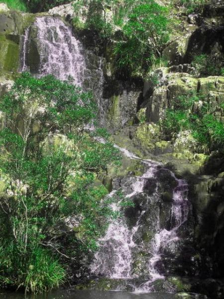 private waterfall in the garden for guests   - Gypsy Falls Waterfall Retreat Azure Cottage - Sydney - rentals