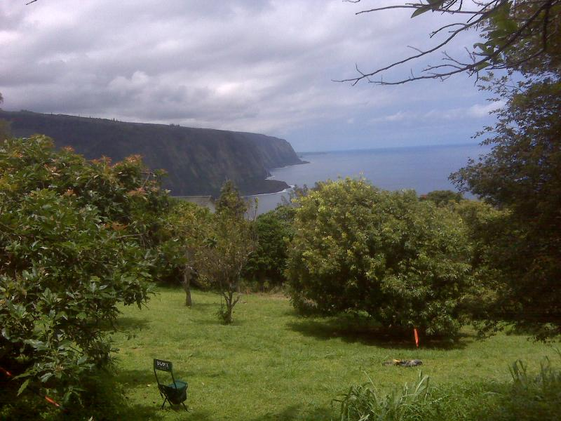 view over the orchard to the cliff and beyond  - Hale Kukui studio, ocean cliff, orchard - Kukuihaele - rentals