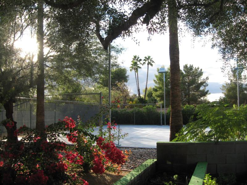 view from living room - Scottsdale,quiet neighborhood,walk to restaurants - Scottsdale - rentals
