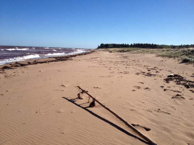 Beach in front of cottage - Moulton Beach House (formely Dun Rovin by the Sea) - Seafoam - rentals