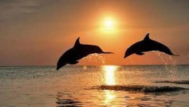 Delight in the dancing dolphins. - Beach, Surf, Golf, Legoland and More! - Carlsbad - rentals