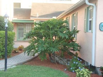 The Beach House - Image 1 - Sarasota - rentals