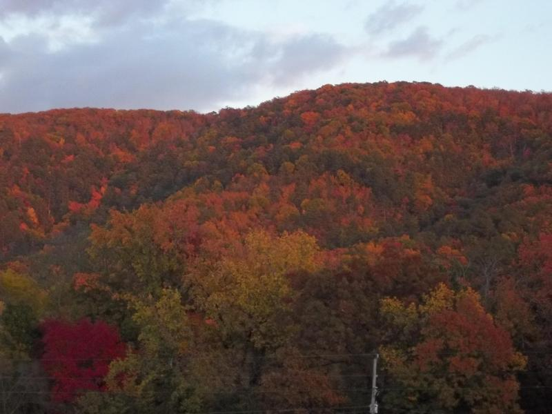 View from the front porch of Autumn on Music Mountain - View Autumn's Glory From Our Front Porch! - Hot Springs - rentals