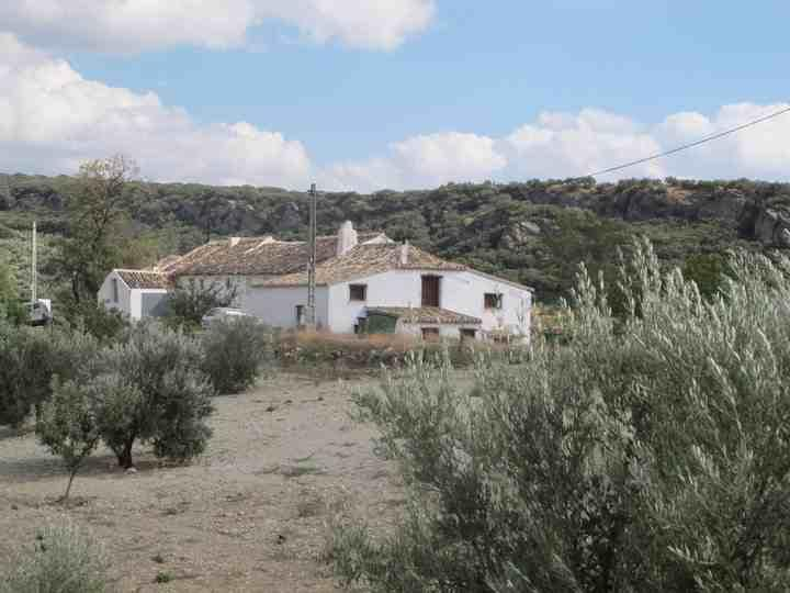 Looking at Olive Grove Farmhouse across olive groves - Self catering cottage in rural Andalucia. - Ribera Alta - rentals